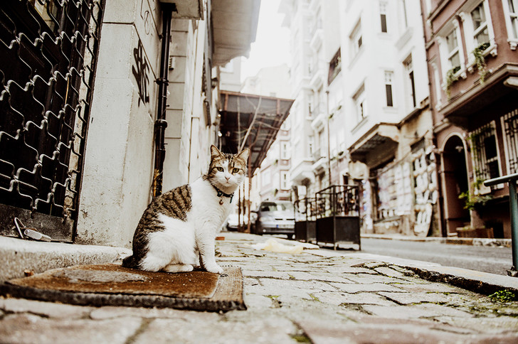 Фото №12 - Короли улиц: настоящие хозяева Стамбула
