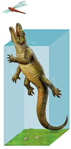 Фото №4 - Удивительная живучесть крокодильего племени