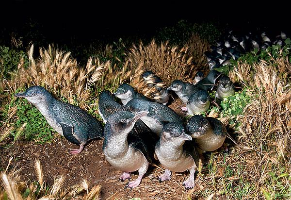 Фото №1 - Парад пингвинов и другие события ноября