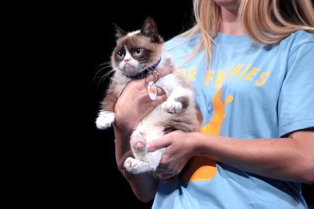 Фото №1 - Названы самые популярные животные в Интернете
