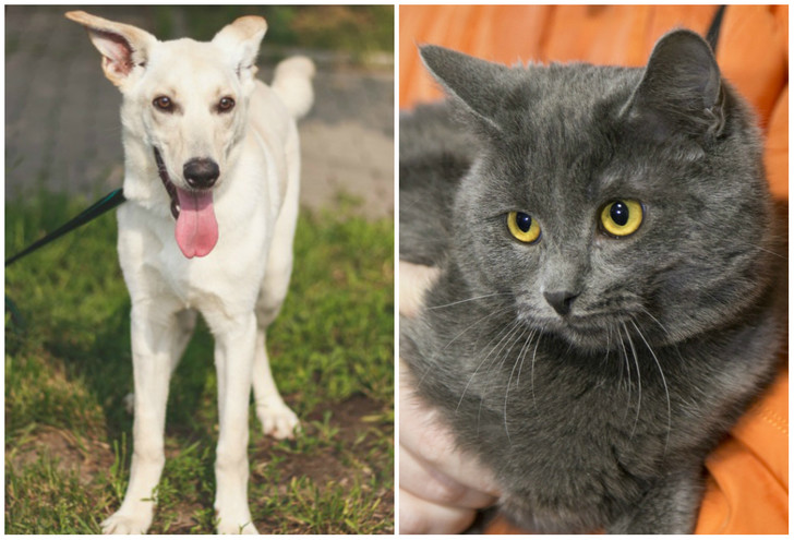 Фото №1 - Котопёс недели: возьми из приюта кота Барри или пса Ючи