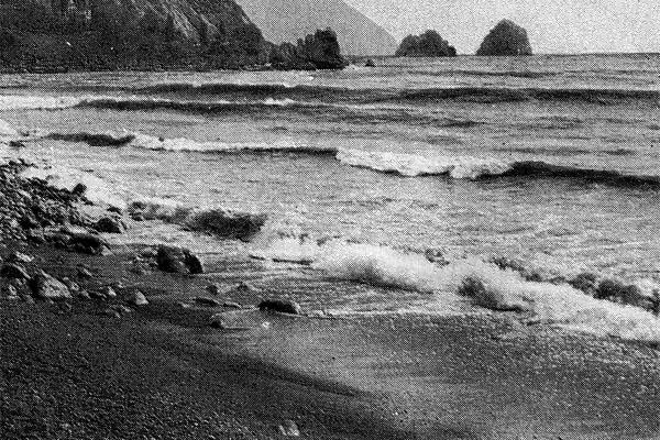 Фото №1 - Лекарство для моря