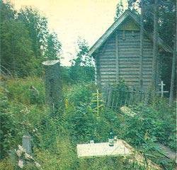Фото №4 - Письма из лесу