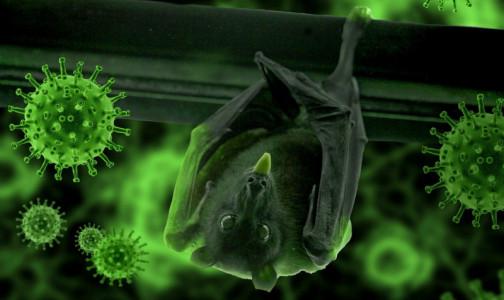 Фото №1 - В ВОЗ определили самую правдоподобную версию того, как коронавирус мог попасть к человеку