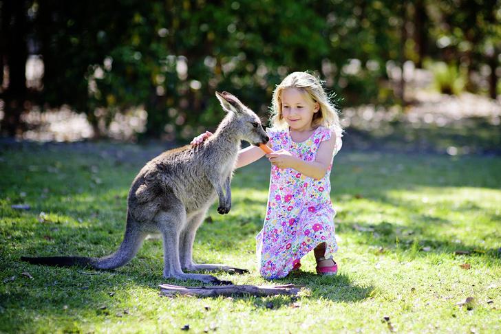 Фото №1 - Австралийский ген