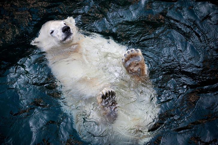 Фото №1 - Ленивый заплыв