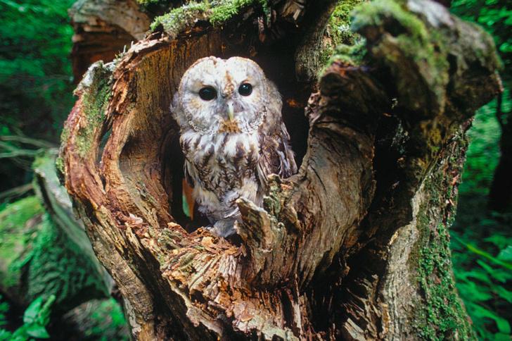 Фото №12 - Фотогалерея: лесные истории
