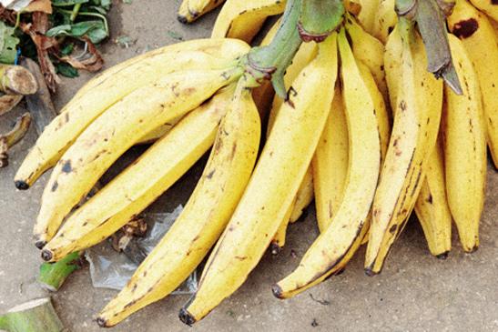 Фото №20 - Рабочий момент: банановый рай