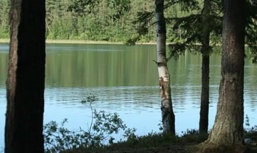 Фото №1 - В водоемах Ленобласти с начала лета погибли 97 человек