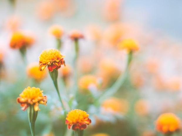 Фото №6 - Вечное лето: 5 долгоцветущих растений для сада