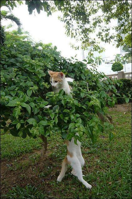 Фото №12 - Умер самый длинный мемокот Интернета Longcat. Каким мы его запомнили в мемах, гифках и видео