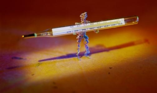 Фото №1 - Отпуск в экзотических странах может закончиться птичьим гриппом