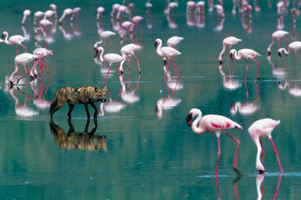 Фото №2 - Территория фламинго