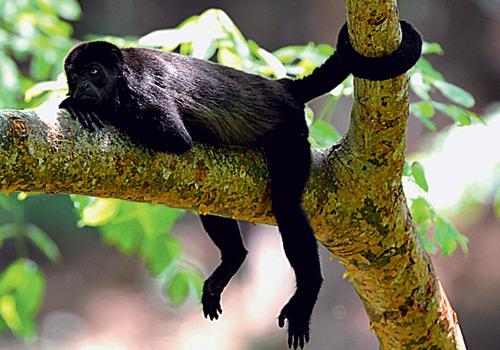 Фото №2 - Зачем млекопитающим нужен хвост?