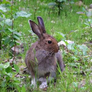 Фото №1 - Кролики перекрыли автостраду