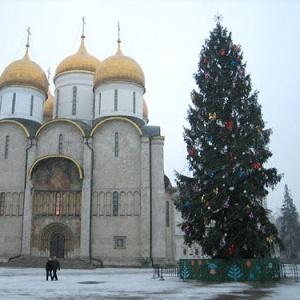 Фото №1 - В Кремле установили елку