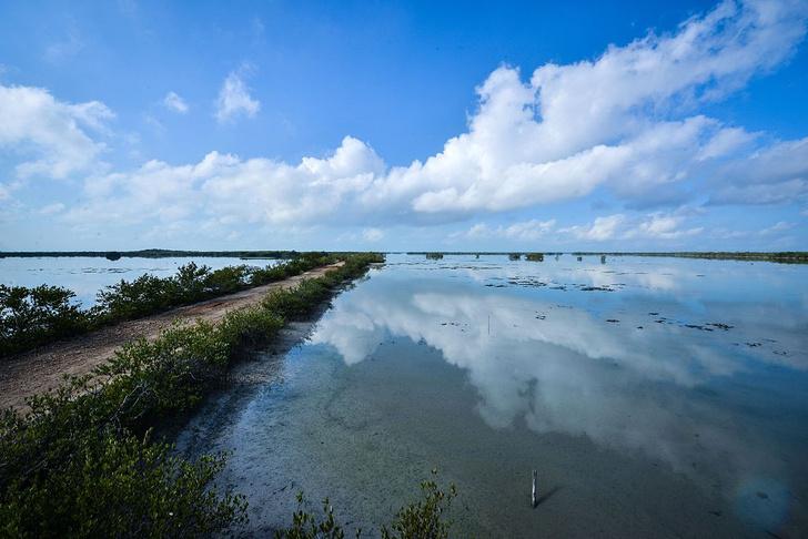 Фото №6 - Притягательная трясина: 12 самых живописных болот мира