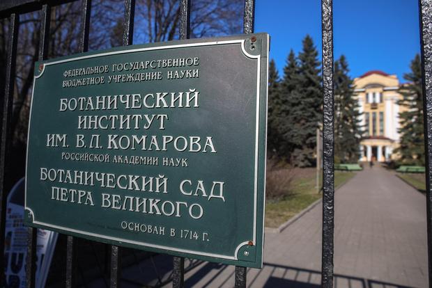 Фото №3 - Ботанический сад Петербурга нанимает волонтеров, чтобы защитить сакуру от эротических фотосъемок