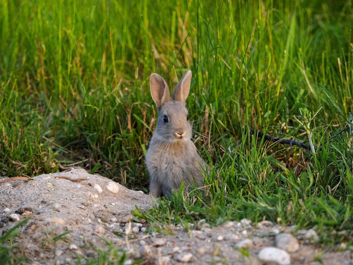 Фото №1 - Почему зверь не чует зайца в норе, ведь он выделяет тепло?