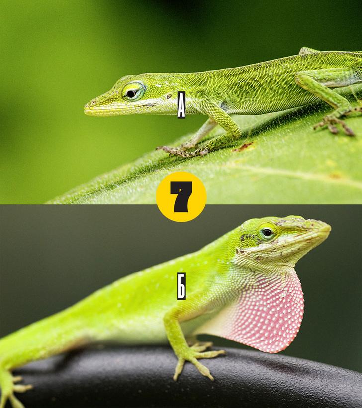 Фото №7 - Тест: мальчик или девочка?