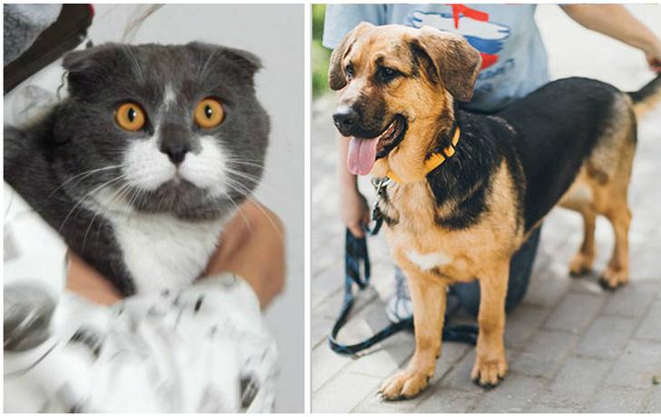 Фото №1 - Котопёс недели: кот Зорро и собака Адель