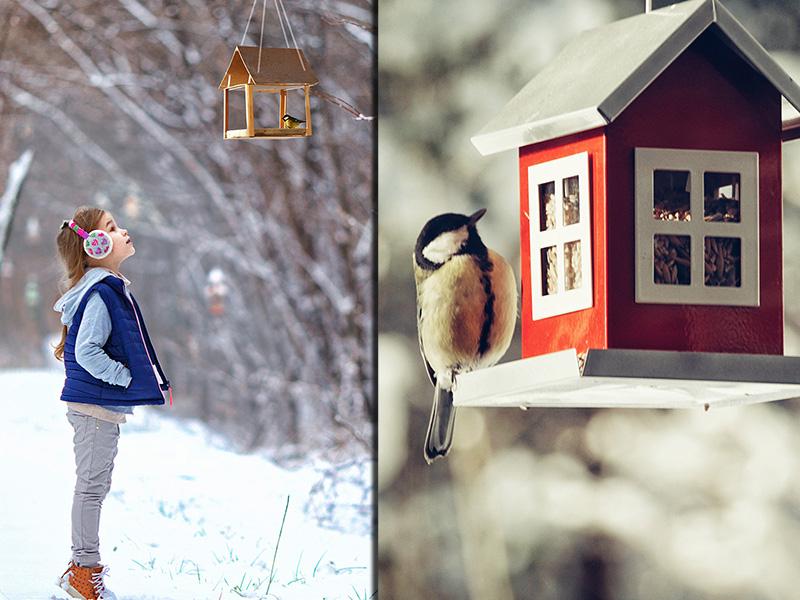 Делаем кормушку для птиц с детьми: пошаговая инструкция