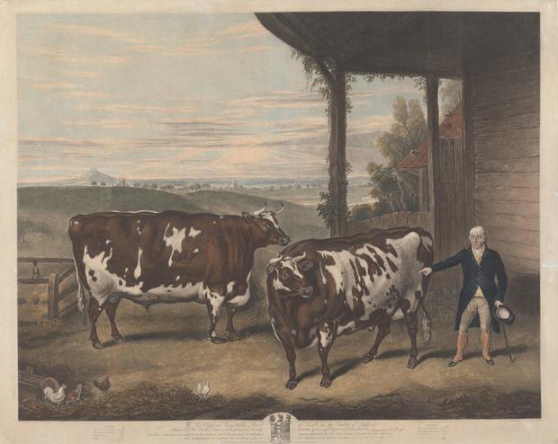 Фото №4 - Почему в XIX веке фермеры заказывали парадные портреты своих толстых коров, свиней и овец