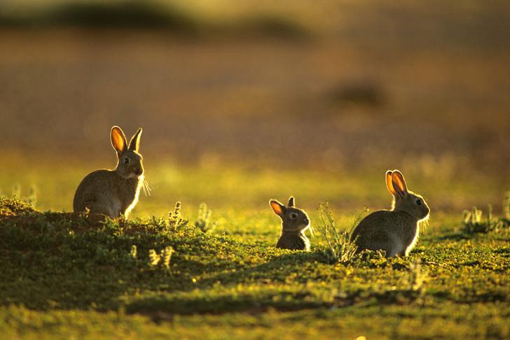 Фото №3 - Экологические террористы: 7 растений и животных, которые оказались феноменальными захватчиками