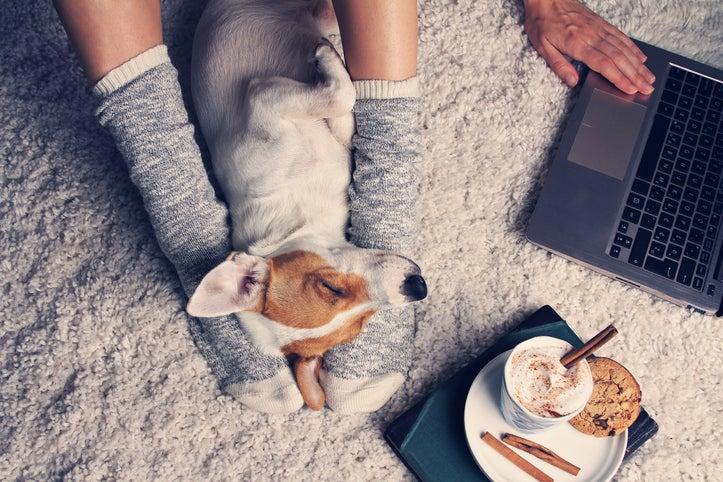 Фото №3 - 9 полезных вещей, которым учат нас домашние животные