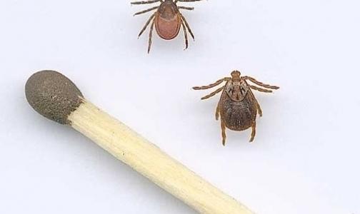 Фото №1 - В Ленобласти от укусов клещей пострадали 4 тысячи человек