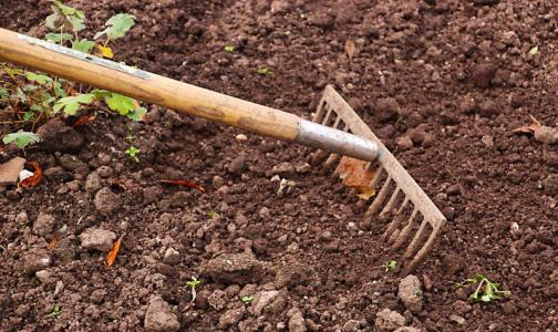 Фото №1 - Огородный спорт: как на даче укрепить свое тело и не подорвать здоровье