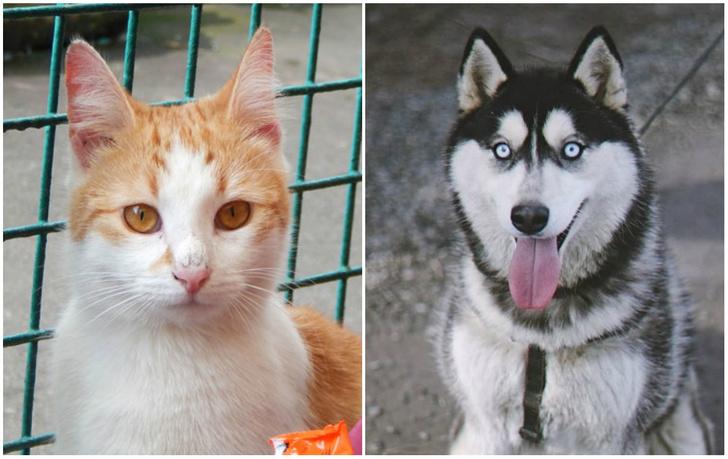 Фото №1 - Котопёс недели: кошка Мэгги и хаски Зима