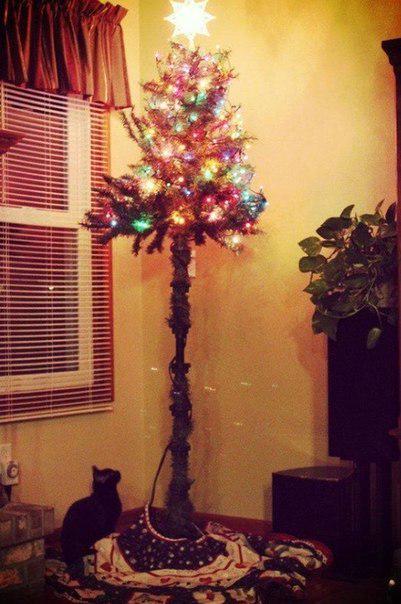 Фото №7 - Как защитить новогоднюю елку от кота: 7 самых хитрых способов с фотоинструкцией