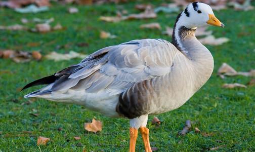 Фото №1 - В Индии обнаружили мертвыми почти 2 тысячи птиц - власти подозревают вспышку птичьего гриппа