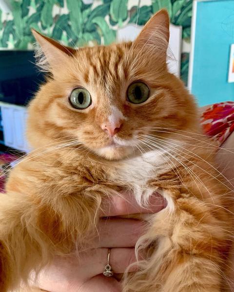 Фото №3 - Короли драмы: 25 невероятно артистичных котиков