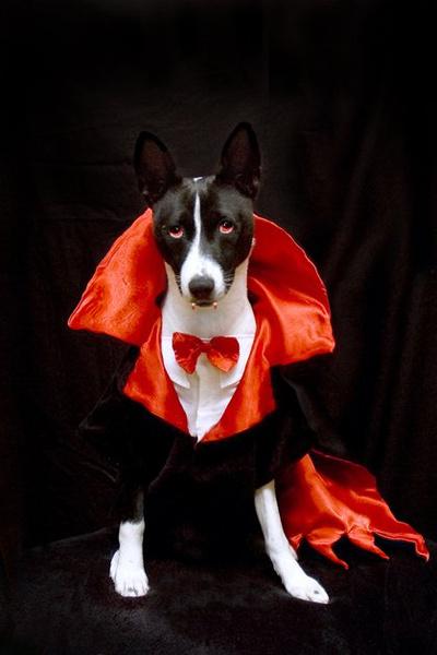 Фото №16 - Фотоподборка недели: собаки, которые уже готовы к Хэллоуину