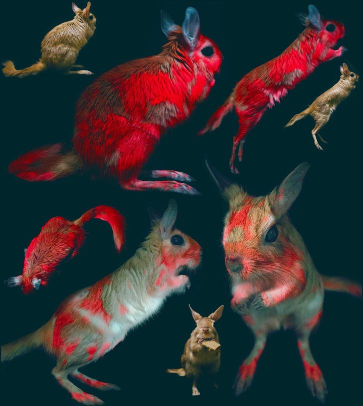 Фото №2 - В Африке нашли светящихся в ультрафиолете грызунов