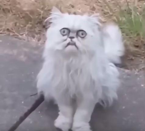 Фото №1 - Гроза улиц: найден кот, от одного взгляда на которого становится жутковато