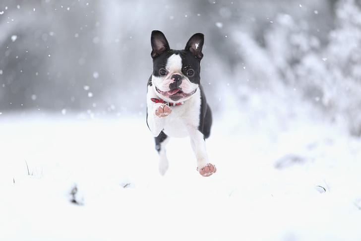 Фото №1 - Собаки запоминают события так же, как люди
