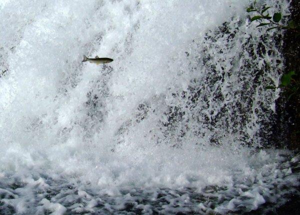 Фото №4 - Водопад в иные миры