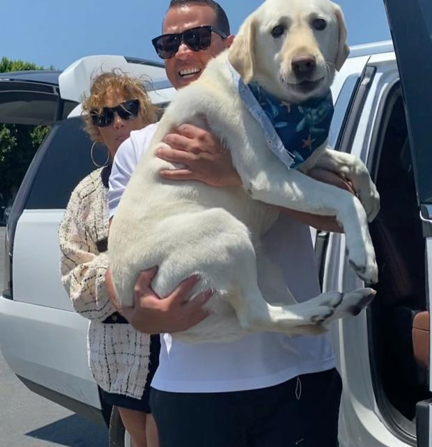 Фото №1 - Без Леди не полетим: Дженнифер Лопес с семьей и собаками улетела на отдых