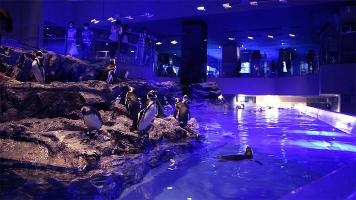 Фото №1 - Вместо сериала: сложная схема отношений пингвинов в зоопарке