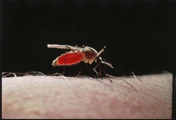 Фото №1 - Почему комары не переносят ВИЧ?