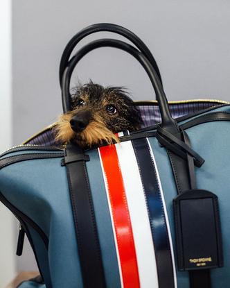 Фото №11 - Фэшн-дизайнеры и их собаки. Заряжено на лайки!