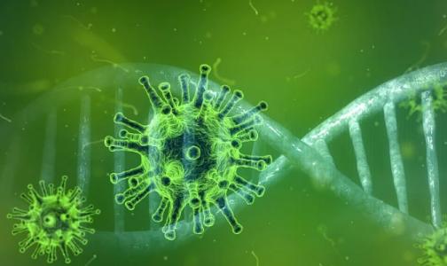 Фото №1 - Северо-западный штамм коронавируса нашли у петербуржца. Опасен ли он для переболевших и привитых, рассказали ученые
