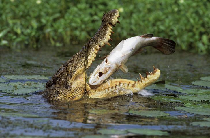 Фото №3 - Не ходите, дети, в Австралию гулять: 5 самых опасных животных континента