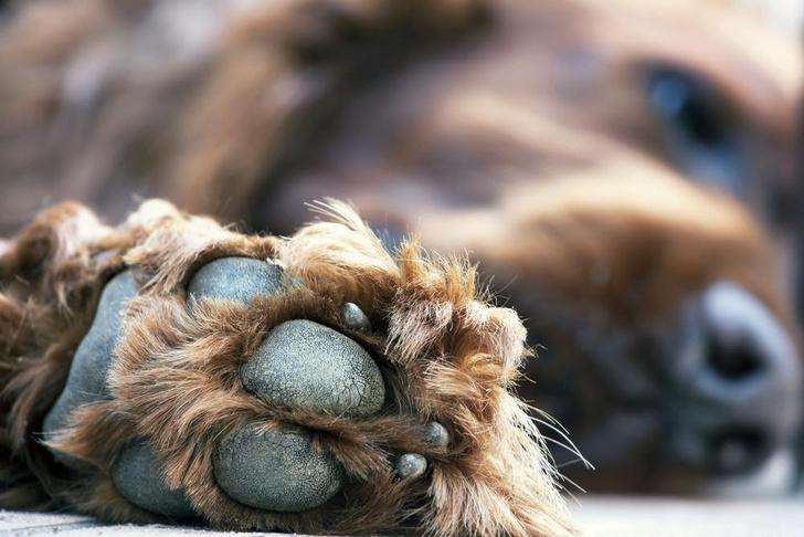 Фото №1 - Ветеринары пытаются объяснить, почему лапы собак пахнут попкорном