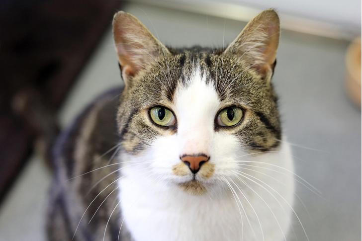 Фото №1 - Домашние кошки превзошли в размерах предков