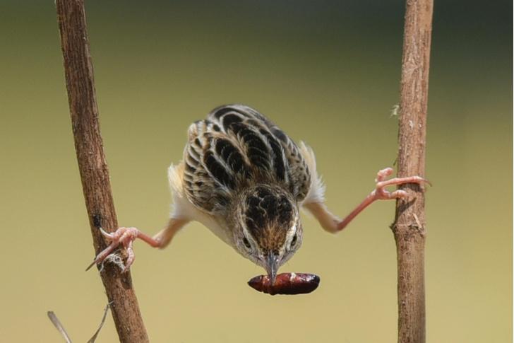 Фото №1 - Акробатический трюк