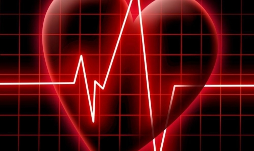 Фото №1 - Росссийские ученые создали цифровое сердце